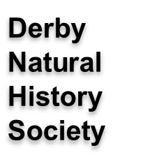 Derby  Natural History Society