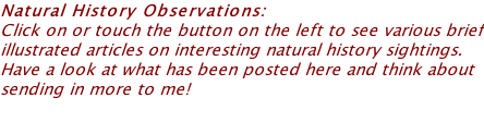 Natural History Observations:  Click on or touch the button on the left to see various brief illustrated articles on interesting natural history sightings. Have a look at what has been posted here and think about sending in more to me!